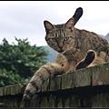 GF3-探訪猴硐貓之村-033.jpg