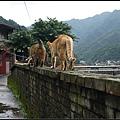 GF3-探訪猴硐貓之村-043.jpg