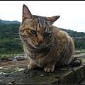 GF3-探訪猴硐貓之村-042.jpg