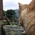 GF3-探訪猴硐貓之村-037.jpg