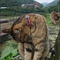 GF3-探訪猴硐貓之村-046.jpg
