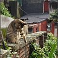 GF3-探訪猴硐貓之村-030.jpg