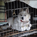 GF3-探訪猴硐貓之村-057.jpg