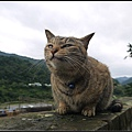 GF3-探訪猴硐貓之村-040.jpg