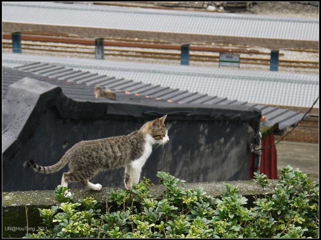 Resized_GF3-探訪猴硐貓之村-116.jpg