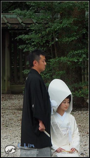 日本單身行第七日之1-052