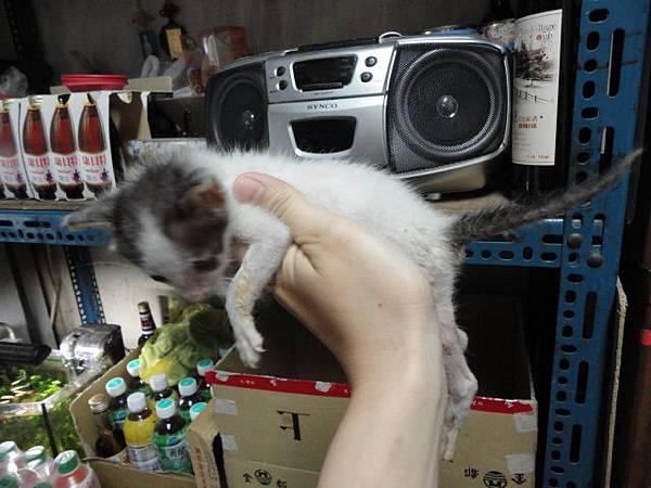100.06.30 許大哥貓屋-9