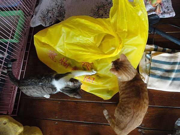 102.12.28菩提貓區給被被