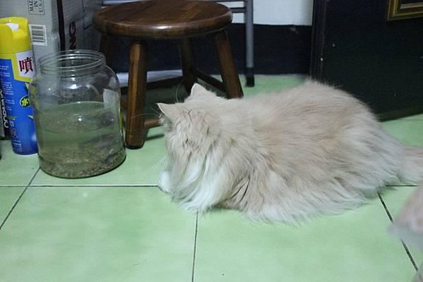 102.04.18茉莉看蝦蝦