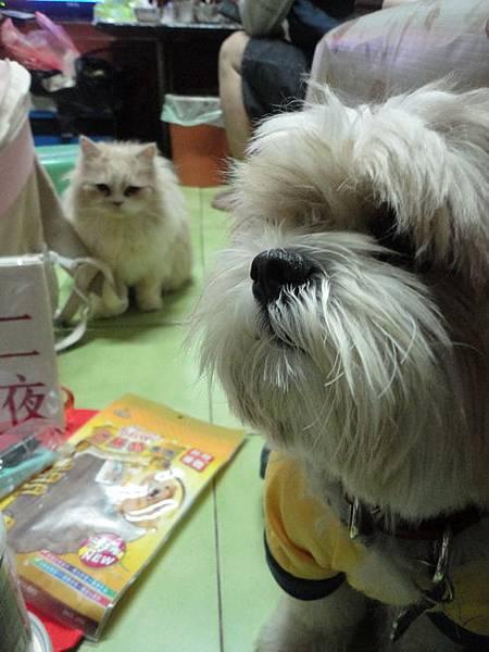 102.12.20寵物展戰利品+co+瓜+茉莉