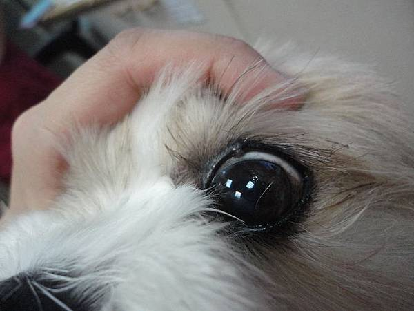 103.12.16coffee健檢+眼睛長一顆
