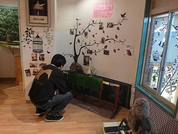 103.12.09日本-道頓堀-貓頭鷹咖啡廳