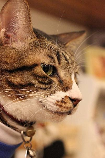 104.02.26貓咪先生的朋友