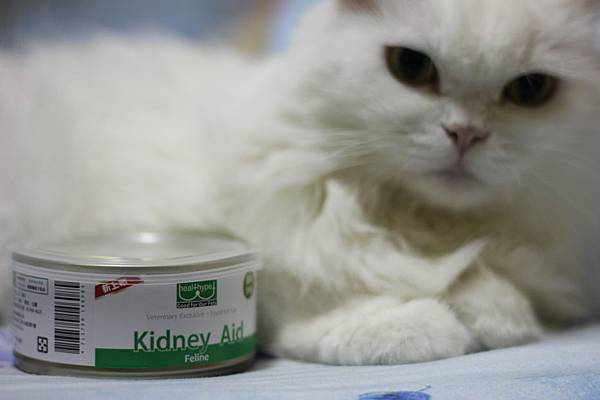 104.10.29kidney Aid貓腎臟處方罐-茉莉+雪