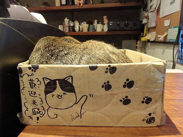 104.02.26台北貓極簡