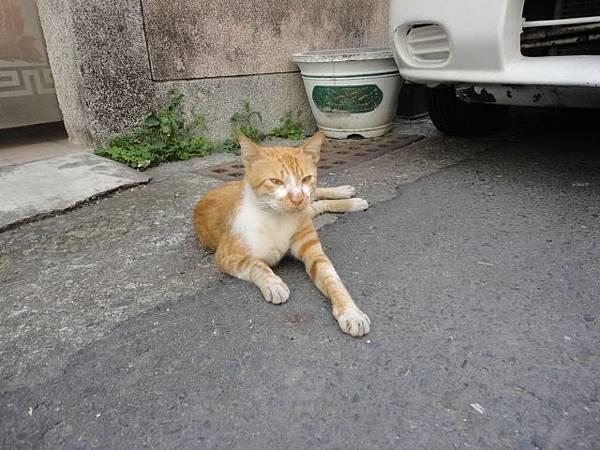 100.05.29安平躲貓貓-樹屋旁的小巷子