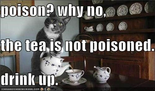 cat drink tea