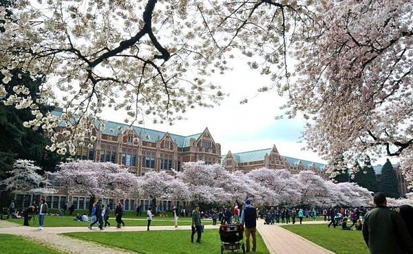 University-WA-Cherry-Blossoms-2-720x444.jpg