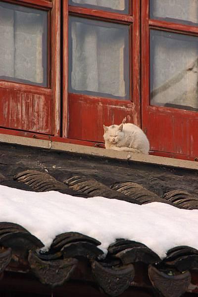 SZ snow 28.JPG
