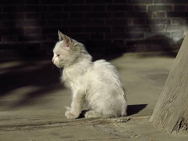 cat a2