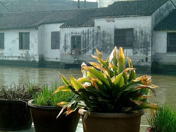 Suzhou m16.JPG
