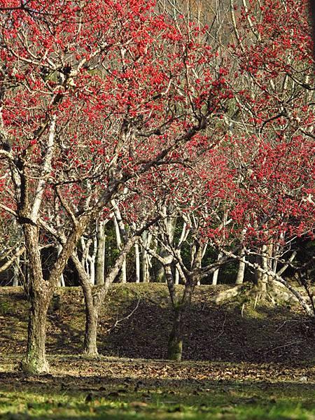 Kyoto 1d11.JPG