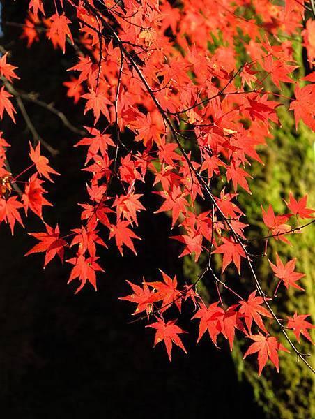 Kyoto 1d13.JPG