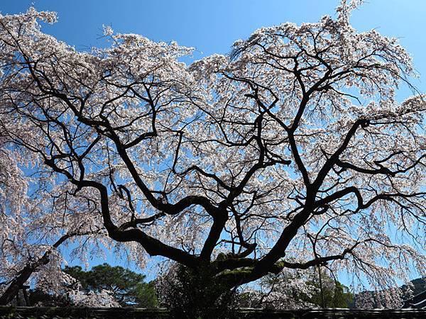Kyoto 2q3.JPG