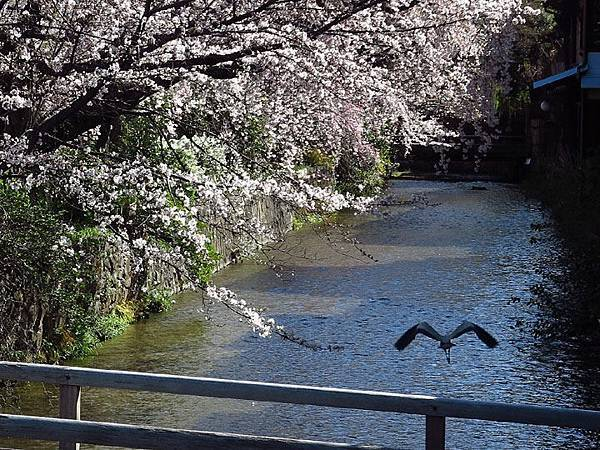 Kyoto 3h2.JPG