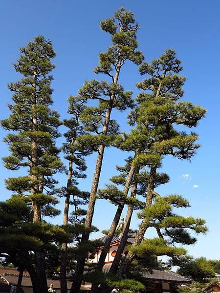 Miyajima e1.JPG