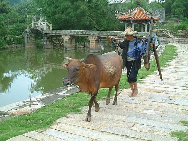 Zhangpu b1.jpg