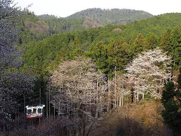 Nara h14.JPG