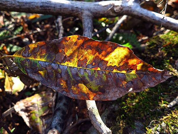 color leaves 1.JPG