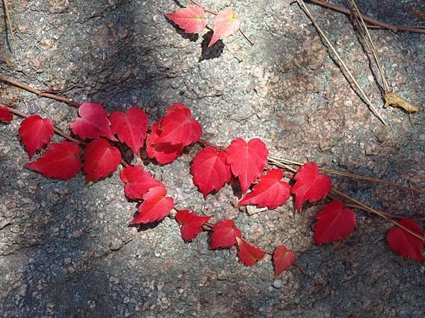 color leaves 2.JPG