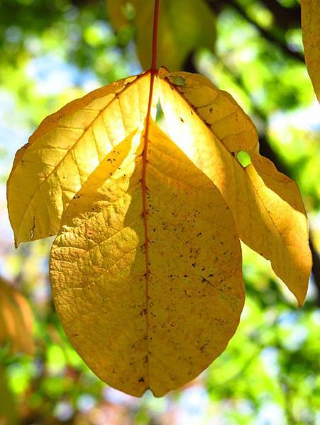 color leaves 4.JPG