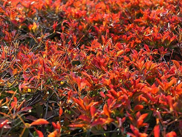 color leaves 5.JPG