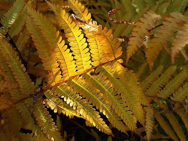 color leaves 6.JPG