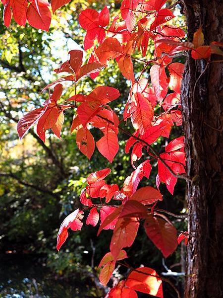 color leaves 7.JPG