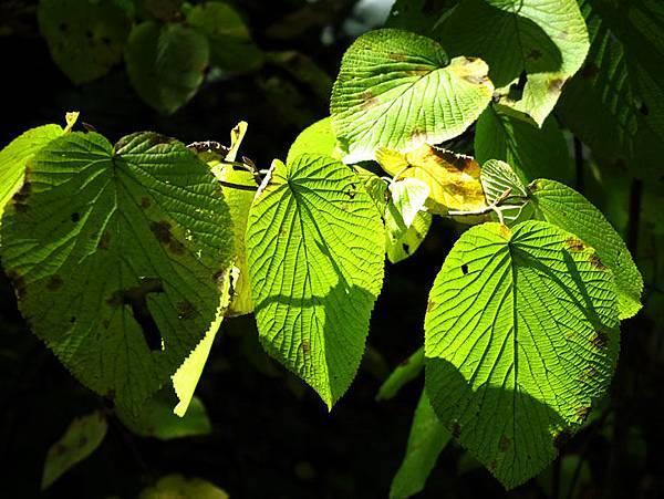 color leaves 9.JPG