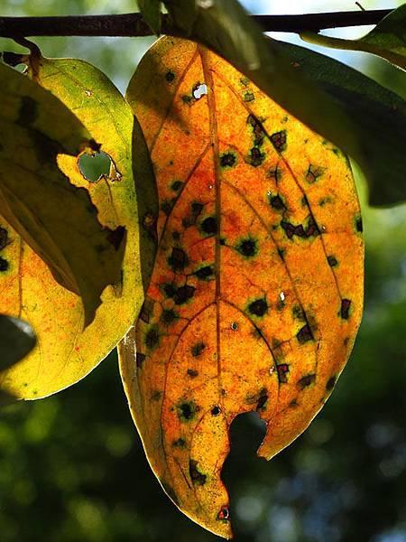 color leaves 10.JPG