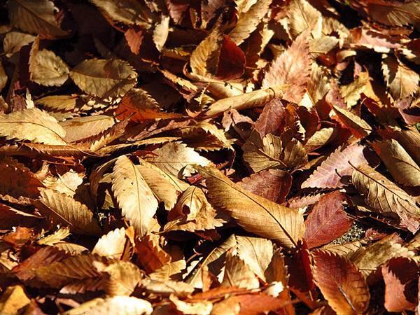 color leaves 11.JPG