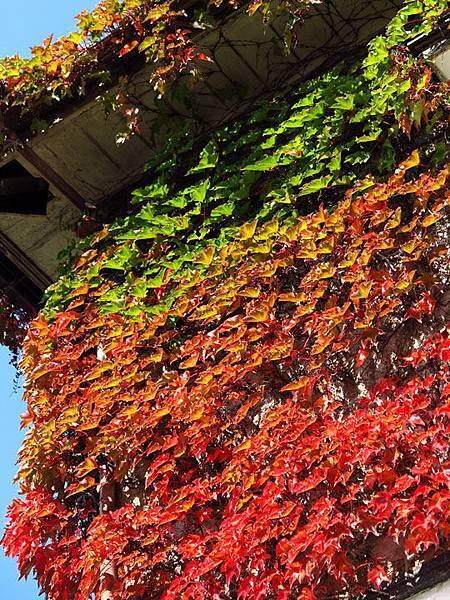 color leaves 13.JPG