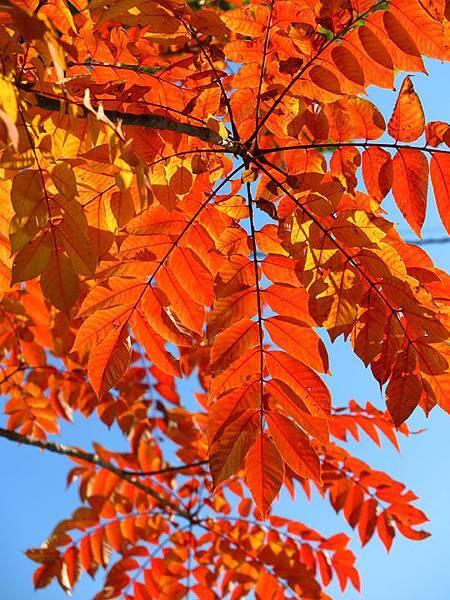 color leaves 16.JPG