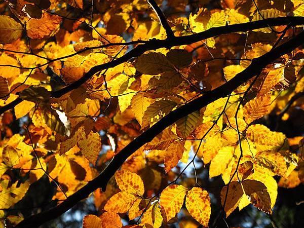color leaves 17.JPG
