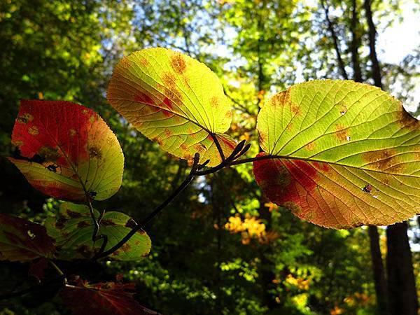 color leaves 18.JPG