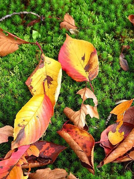 color leaves 19.JPG