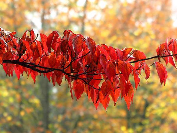 color leaves 21.JPG