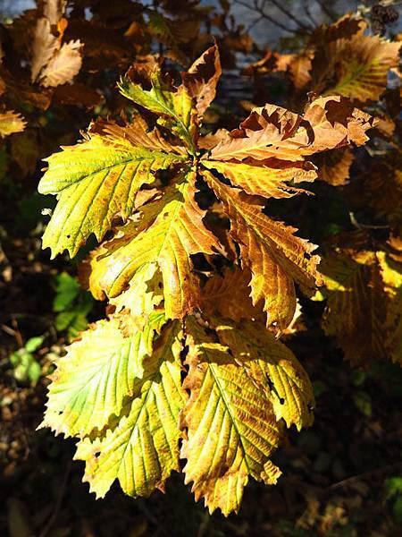 color leaves 22.JPG