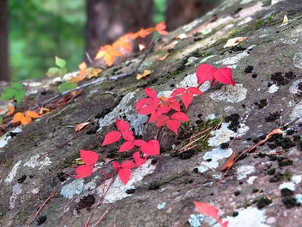 color leaves 23.JPG