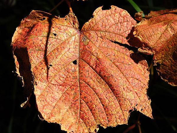 color leaves 24.JPG